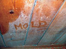 house-mold